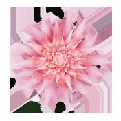 key-pressed-flowers-1