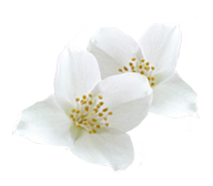 key-jasmine